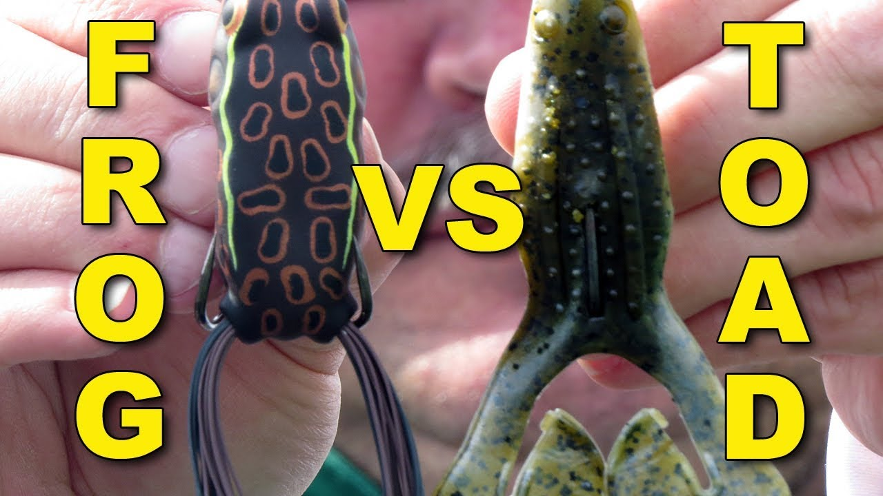 Frogs Vs Toads When To Use Each Bass Fishing