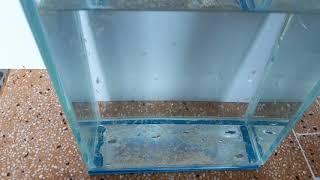 Vlog 8 Artemia sống trong nước ngọt được bao lâu ???