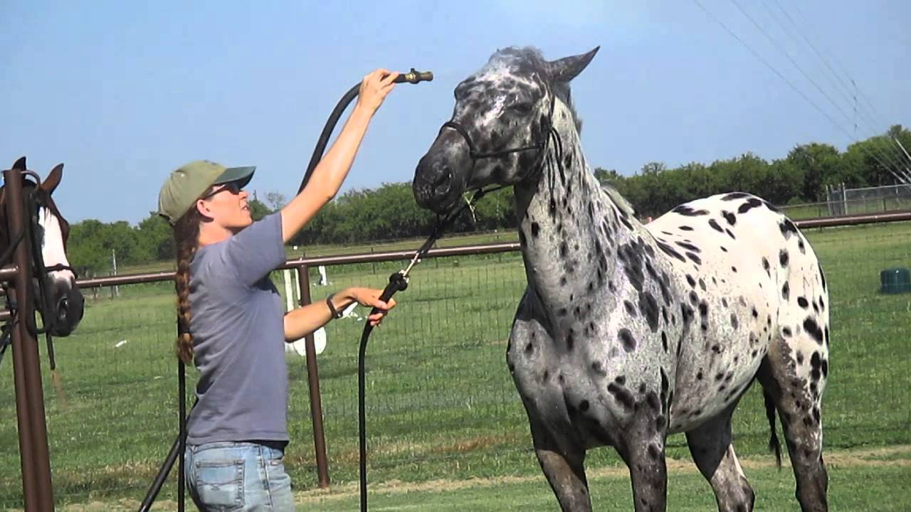 Washing A Horse's Face That Doesn't Like It