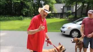 Dog Aggression While Walking - Dog Intervention Dog Whisperer Big Chuck Mcbride