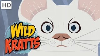 Wild Kratts - Best Season 2 Moments! (Part 5/5) | Kids Videos
