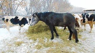 РАЗВЕДЕНИЕ животных 🐮🐷🐴как деревенский БИЗНЕС.Итог года: кого купили кого продали? РАСШИРЯЕМСЯ!!