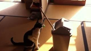 猫のおもちゃを作ってみた