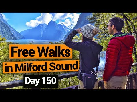Free Walks in Milford Sound –  New Zealand's Biggest Gap Year – Backpacker Guide New Zealand