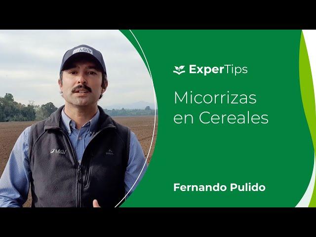 Expertips: Micorrizas en Cereales