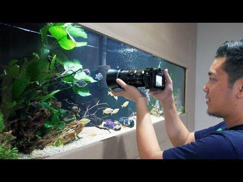 Aquarium Fish Photography Part 1