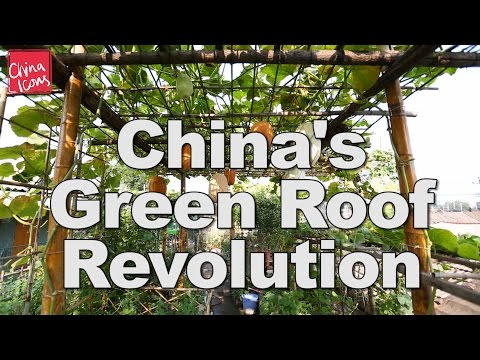 China's Green Roof Revolution | A China Icons Video
