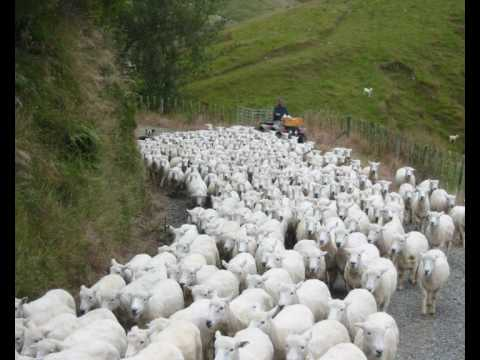 Brian Doerksen: When you shepherd me