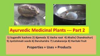 Ayurvedic Medicial Plants –Part 2 l Medicinal Herbs l Dravyagunavignyan l Ayurvedic Herbology