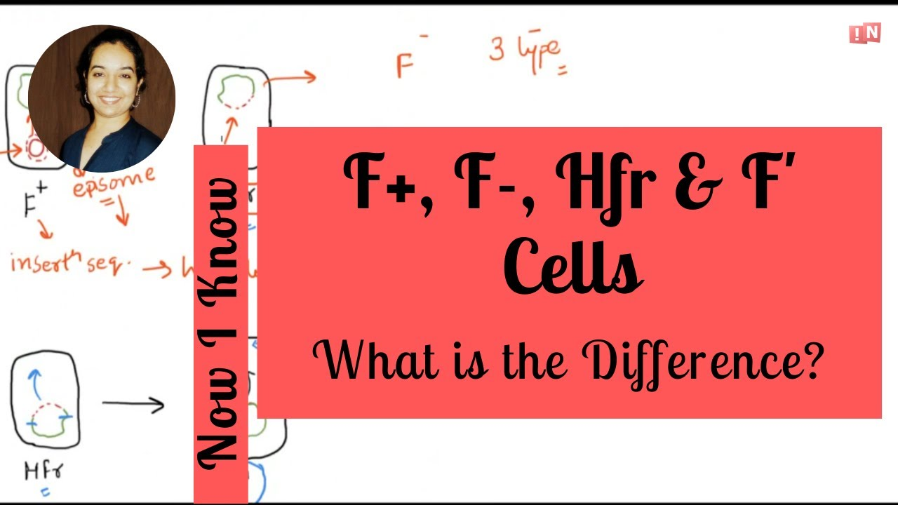 Download F+, F-, Hfr and F' Cells – What is the Difference?