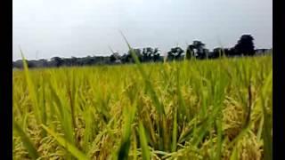 Banladesh new sex