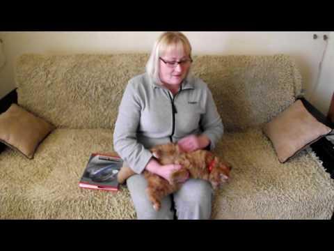 Как найти кота в деревне