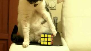 что делать, если не получается собрать кубик Рубика(, 2012-01-29T11:07:37.000Z)