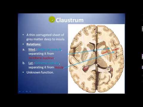 Neuroanatomy of the Basal Ganglia by Dr Ahmed Wael Ibrahim