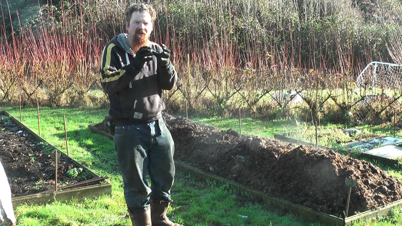 How To Use Fresh Horse Manure On The Garden Youtube