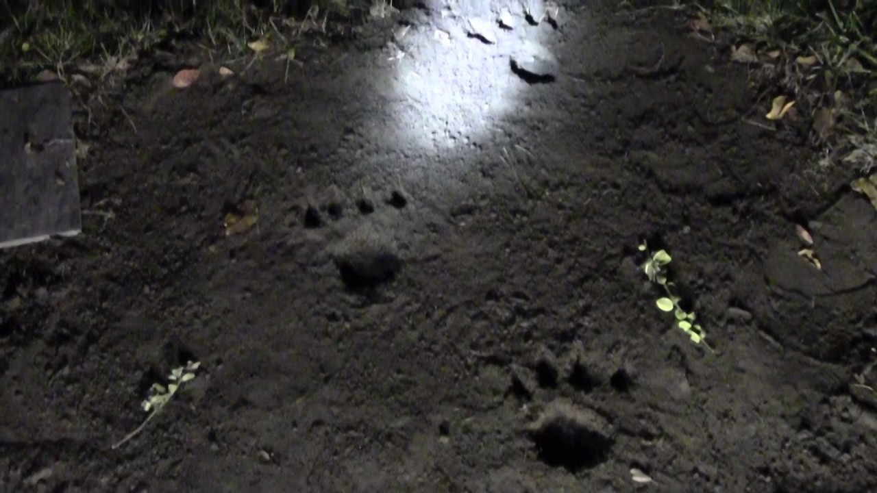 Werewolf Foot Prints Youtube