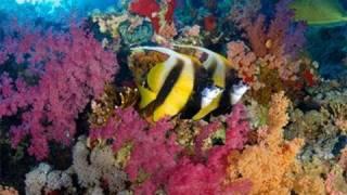WAS IST WAS - Meereskunde - Doku Film DVD Video Wiki Kinder Wissen Fisch Wal Hai Ozean Korallen