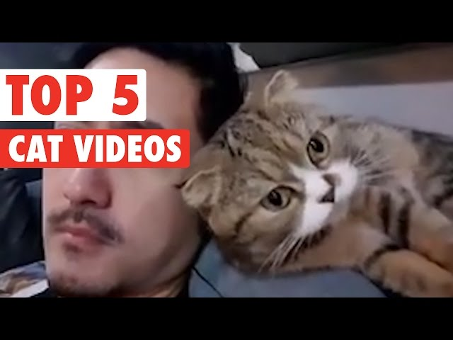 Top 5 Cat Videos || Funny Kitten Compilation