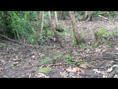 How To Study Enigmatic Features: Craters In The Coastal Forest Of Guam -- Archaeology Studio 019