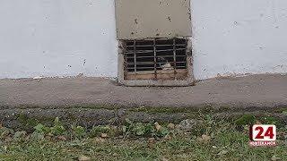 Бездомные кошки оказались замурованы в подвале