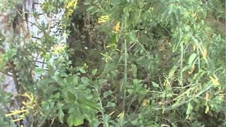 Tratamento da Água em  Algodão de Jandaíra - PB - ( Parte 01 )