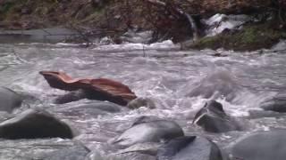 Elwha River February 16, 2017