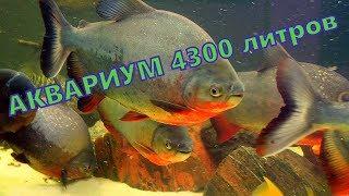 Аквариум  Аквариумная рыбка