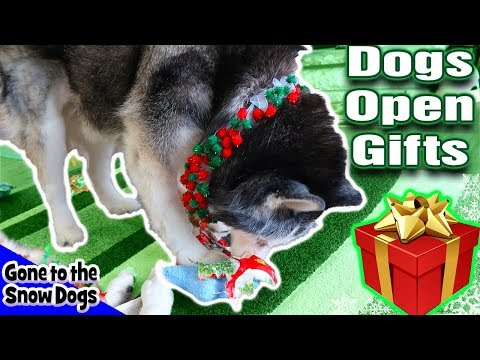 Dogs Opening Christmas Presents  | What I got For Christmas 2017 | Husky Opens Gifts