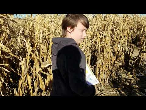 Liberty Corn Maze Part 1
