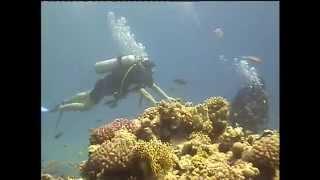 8 3 12 красное море водолаз в первый раз Teil 2
