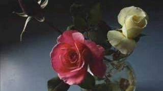 Watch Enya China Roses video