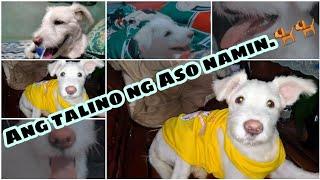#dog #doglover #sky  Nakipag laro ako sa aso namin (MAGALING NA SIYA!)