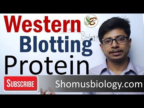 western blotting principle procedure and application pdf