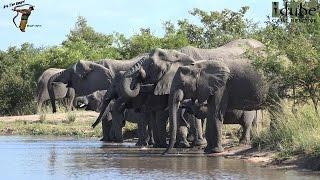 Two Elephant Herds At One Waterhole (4K Video)