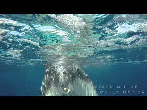 Eye to Eye with Whales in Tonga- Simon Millar