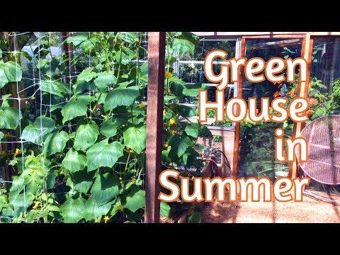 Greenhouse – Mid Summer Update