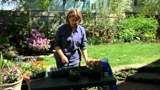 How Long Until Marigolds Flower From Seed : Planting & Gardening Vegetables