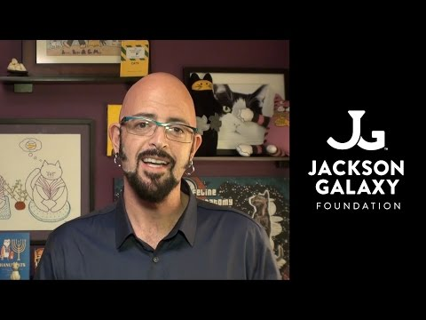 Jackson galaxy doovi for Jackson galaxy store