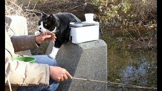 【地域猫】猫と釣りに行くと苦労が絶えない。【魚くれくれ野良猫製作委員会】