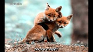 [mrHello-001] What does the fox say [English subtitle]