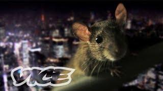 PEST KINGDOM: SUPER RATS - 都心に潜む不死身ネズミの進化