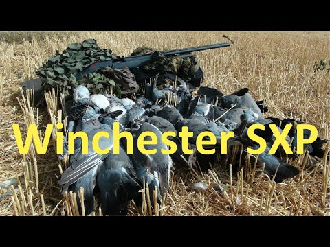 Winchester SXP Fast Pigeons