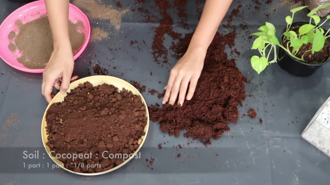 Prepare Potting Soil For Indoor Plants