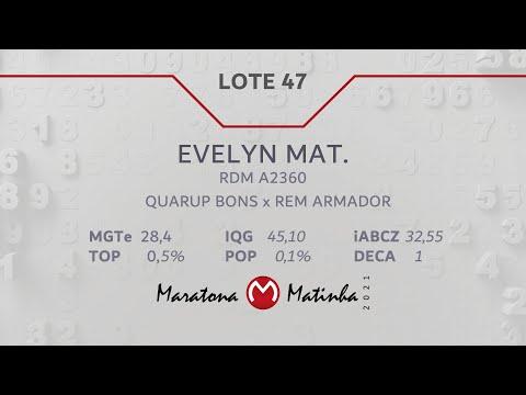 LOTE 47 Maratona Matinha