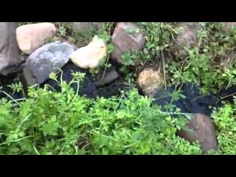 Bog filtration for japanese koi pond rochester minnesota for Koi pond bog filter