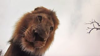 How Different Animals React to GoPros