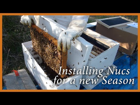 Honey Bees – Starting a New Season Installing Nucs – GSB S2 E1