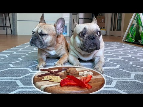 Can they resist? Leaving My French Bulldogs Alone With A Snack Platter