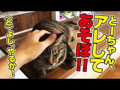 猫さん、遂に新しい遊びを習得してしまう!!