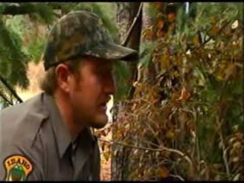 Fish And Game Officers Bust Would Be Poachers